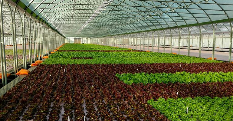 Amanzi_Farms_Lettuce_Pond.jpeg