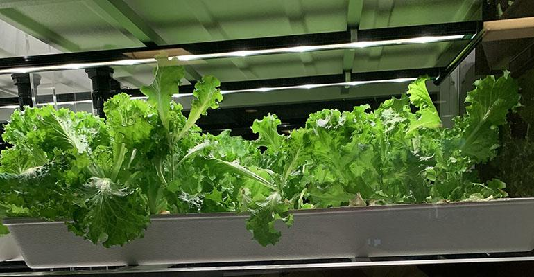 Babylon-microgarden-lettuce-at-Centra-Lynchburg-Hospital.jpg