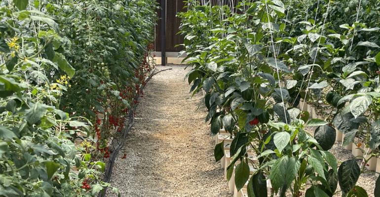 Container gardens.jpeg