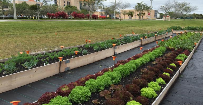Homestead Hospital Grow2Heal garden.JPG