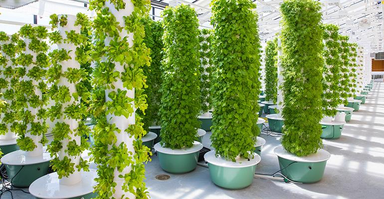 VC_Greenhouse_Towers_with_Plants_20180327_001_copy.jpg