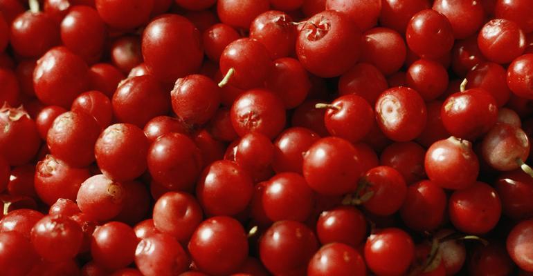 lingonberry-flavor-of-the-week.jpg