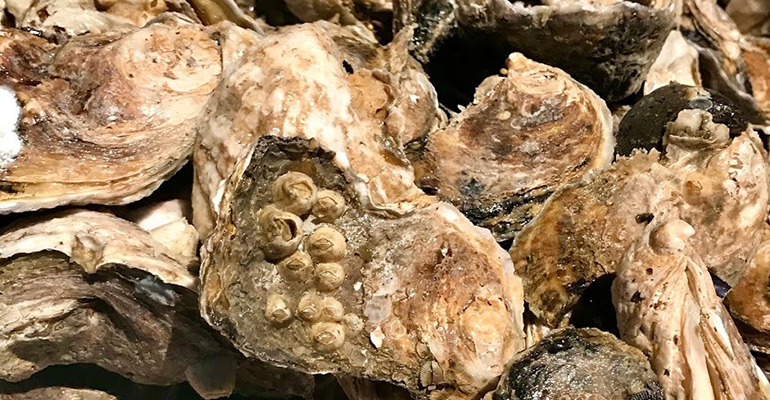 loyola-oyster-shells.png