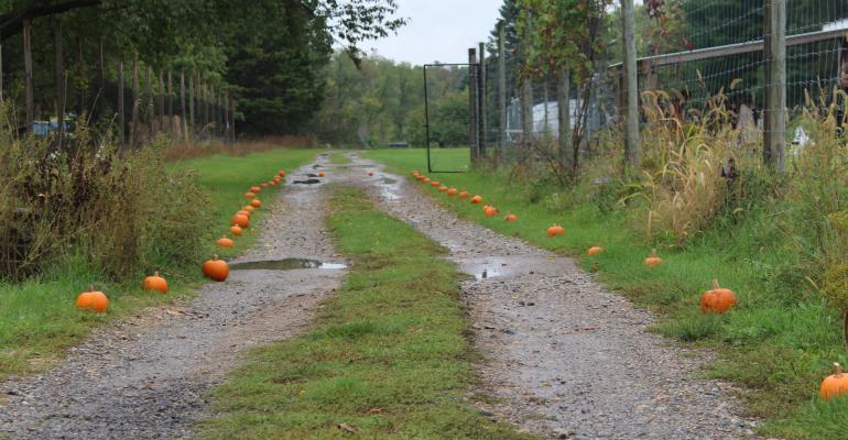 pumpkin path.JPG