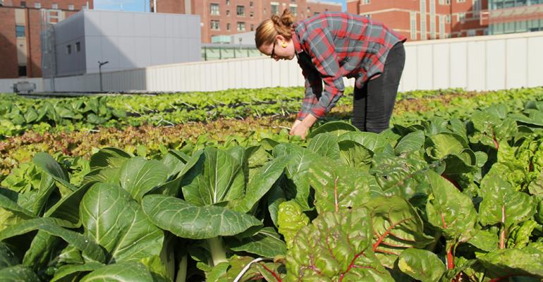 Boston Med Center rooftop farm\'s impressive harvest | Food Management