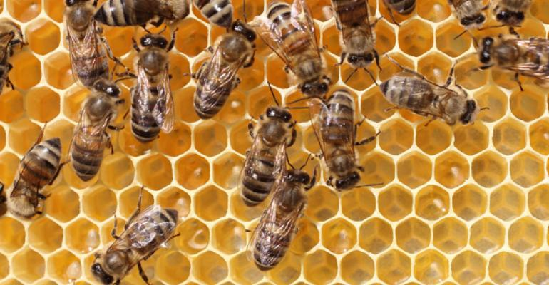 Hospital Honeybee Tour Teaches Kids