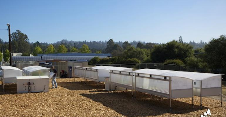 Hydroponic crops grow in special bins on the corporate campus of Plantronics in Santa Cruz CA supplying the company39s cafe with fresh greens and lettuces