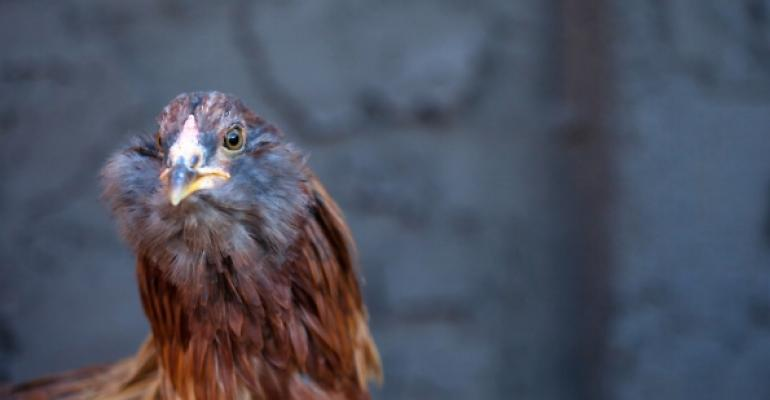 3 quick bites: Solving the mystery of chickens with beards