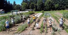 Olympia_student_farm.jpeg