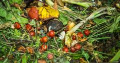 composting-at-sodexo.jpg
