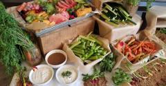 edible_garden2_Morrison_Healthcare.jpg