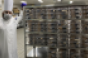 San_Diego_CC_COVID_Kitchen_Chef_w_Carts.png