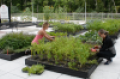Rooftop Farm1 (2).png