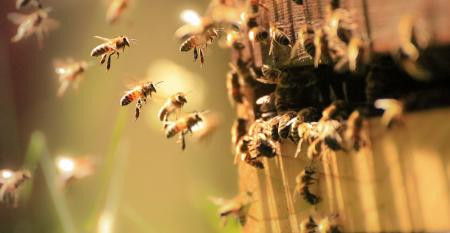 bee-hive-Emerbees.jpg