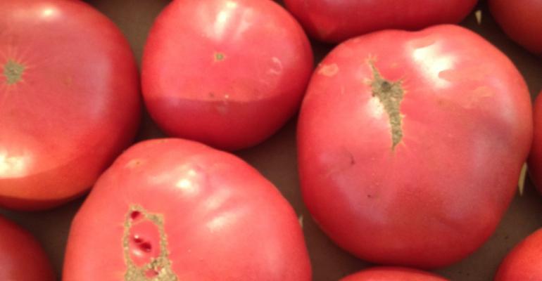 Local tomato bounty yields year's worth of marinara for Harvard