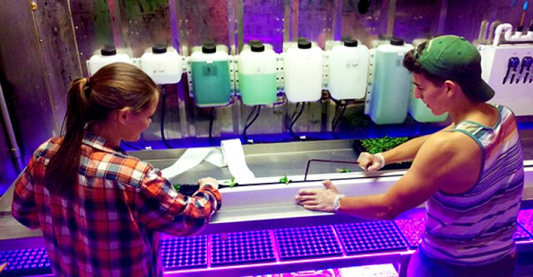 Chad Marvin and Kylie Campanelli sustainability program assistants and students at Stony Brook transplant lettuce seedlings in the Leafy Green Machine