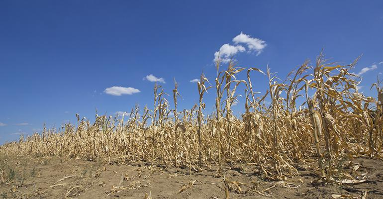 5 things: Study: Global warming's harm to crop production to worsen